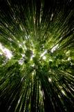 Bosque de bambú a lo largo del rastro de Pipiwai Imagen de archivo
