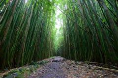 Bosque de bambú a lo largo del rastro de Pipiwai Fotografía de archivo
