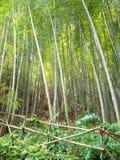 Bosque de bambú protegido por la barrera Fotografía de archivo libre de regalías