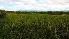Bosque de bambú tropical metrajes