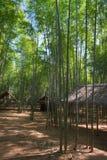 Bosque de bambú y pabellones de madera Imágenes de archivo libres de regalías