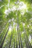 Bosque de bambu Fotografia de Stock