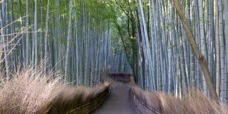 Bosque de bambu Imagem de Stock