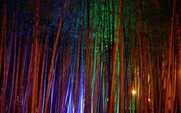Bosque de bambu foto de stock royalty free