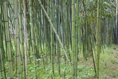 Bosque de bambu Fotos de Stock Royalty Free