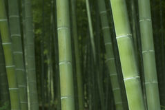 Bosque de bambu Fotografia de Stock Royalty Free