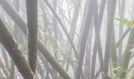 Bosque de bambu foto de stock