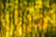 Bosque de bambu borrado no dia ensolarado Fotografia de Stock