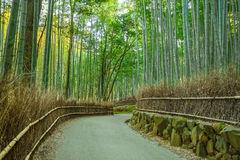 Bosque de bambu em Arashiyama em Kyoto imagem de stock