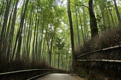 Bosque de bambu em Arashiyama em Kyoto, Japão Foto de Stock Royalty Free
