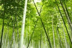 Bosque de bambu em China imagens de stock