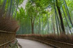 Bosque de bambu em Kyoto fotografia de stock