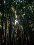 Bosque de bambu, Japão imagem de stock