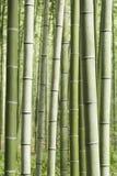 Bosque de bambu Japão de Arashiyama fotografia de stock royalty free