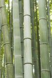 Bosque de bambu Japão de Arashiyama imagens de stock royalty free