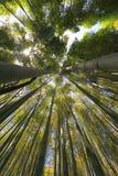 Bosque de bambu de Kyoto, Kyoto, Japão imagens de stock royalty free