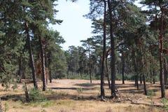 Bosque de Brown debido a la sequedad en los Países Bajos durante el verano de 2018 fotos de archivo libres de regalías