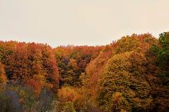 Bosque de Cárpatos Fotos de archivo