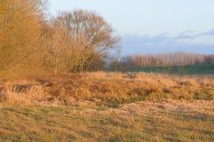 Bosque de color naranja del terreno de aluvión Imagen de archivo