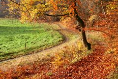 Bosque de Colorul imagen de archivo