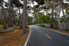 Bosque de Cypress imagem de stock royalty free