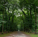 Bosque de desaparición de la punta en república del czchek Fotografía de archivo