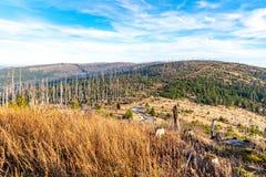 Bosque de Devasted en caues de la infestación del escarabajo de corteza Parque nacional y bosque bávaro, República Checa de Sumav fotos de archivo