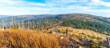 Bosque de Devasted en caues de la infestación del escarabajo de corteza Parque nacional y bosque bávaro, República Checa de Sumav imagen de archivo