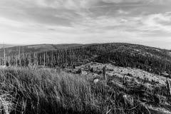 Bosque de Devasted en caues de la infestación del escarabajo de corteza Parque nacional y bosque bávaro, República Checa de Sumav foto de archivo