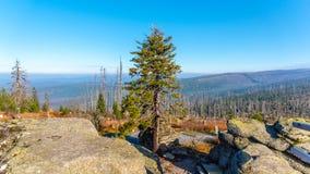 Bosque de Devasted en la causa de la infestación del escarabajo de corteza Parque nacional y bosque bávaro, República Checa de Su imagen de archivo