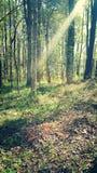 Bosque de Eenchanted Foto de archivo libre de regalías
