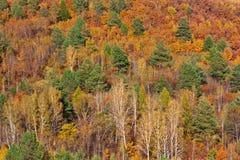 Bosque de Extremo Oriente en otoño, Fotos de archivo libres de regalías