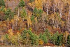 Bosque de Extremo Oriente en otoño, colores rojos y verdes amarillos brillantes Fotos de archivo libres de regalías