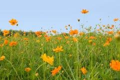 Bosque de flores Fotos de archivo libres de regalías
