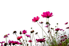 Bosque de flores Imágenes de archivo libres de regalías