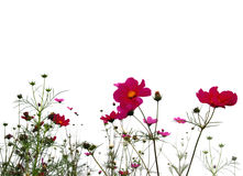 Bosque de flores Foto de archivo libre de regalías
