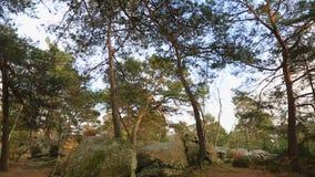 Bosque de Fontainebleau almacen de video