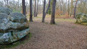 Bosque de Fontainebleau almacen de metraje de vídeo
