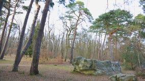 Bosque de Fontainebleau metrajes