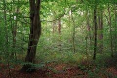 Bosque de Fontainebleau Fotografía de archivo