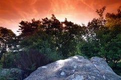 Bosque de Fontainebleau Imagen de archivo
