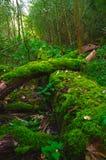 Bosque de Grunewald, Berlín, Alemania Imagenes de archivo