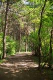 Bosque de hadas Imagenes de archivo