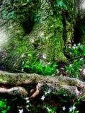 Bosque de hadas de la fantasía Fotos de archivo