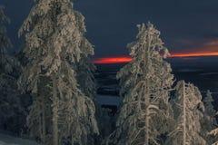 Bosque de hadas del invierno en la puesta del sol fotos de archivo