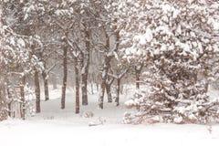 Bosque de hadas del invierno, nieve que cae blur imágenes de archivo libres de regalías