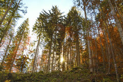 Bosque de Hallstatt, Austria imagenes de archivo