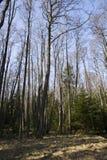 Bosque de hojas caducas Fotos de archivo libres de regalías