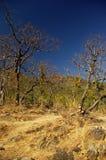 Bosque de hojas caducas foto de archivo libre de regalías