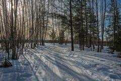 bosque De hojas caducas-conífero en primavera temprana Fotografía de archivo libre de regalías